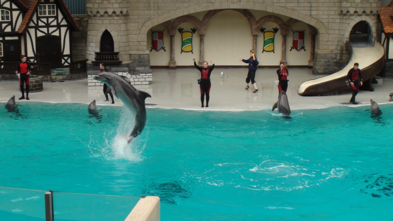 Niagara Falls Hotels >> You Can Visit MarineLand Canada in Niagara Falls Canada